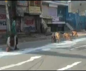 Hungry man share milk with street dogs in Agra